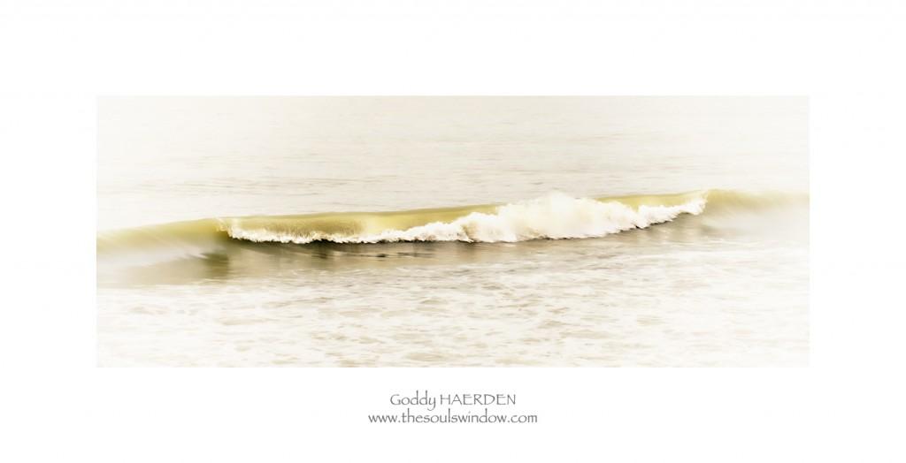 Goddy Haerden FB Golden wave HD kader A2-1666
